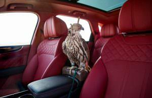 Соколн балобан в салоне Bentley Bentayga Falconry