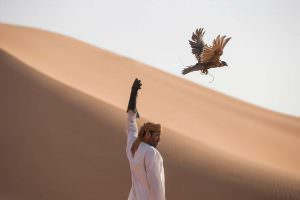 Соколиная охота на Ближнем Востоке - спорт для шейхов