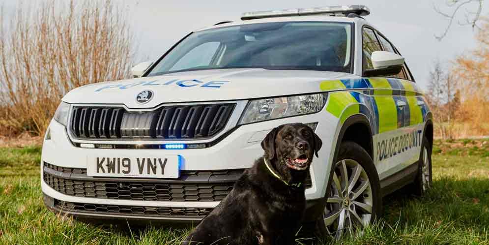 Кроссовер Skoda Kodiaq подготовили для полицейских собак