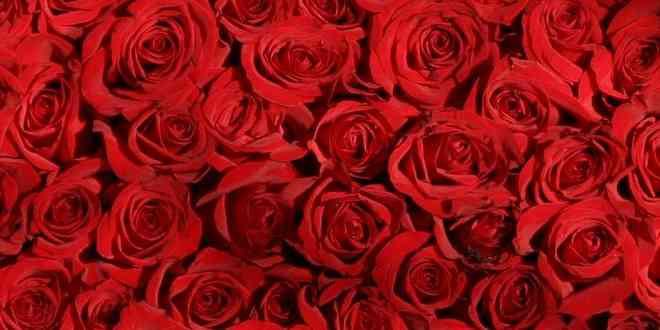 Сложности с покупкой роз в Киеве
