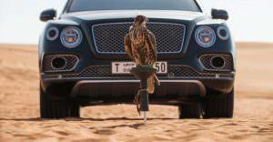 Сокол балобан и Bentley Bentayga