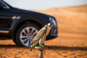 Сокол балобан на Ближнем Востоке