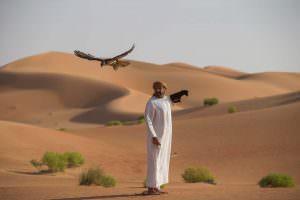 Редкий сокол балобан на охоте на Ближнем Востоке